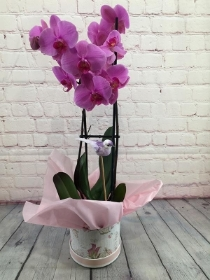 Orchid Hatbox