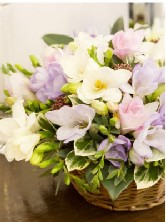 Freesia basket